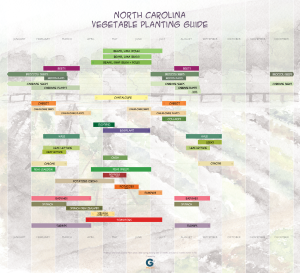NC Vegetable Planting Guide